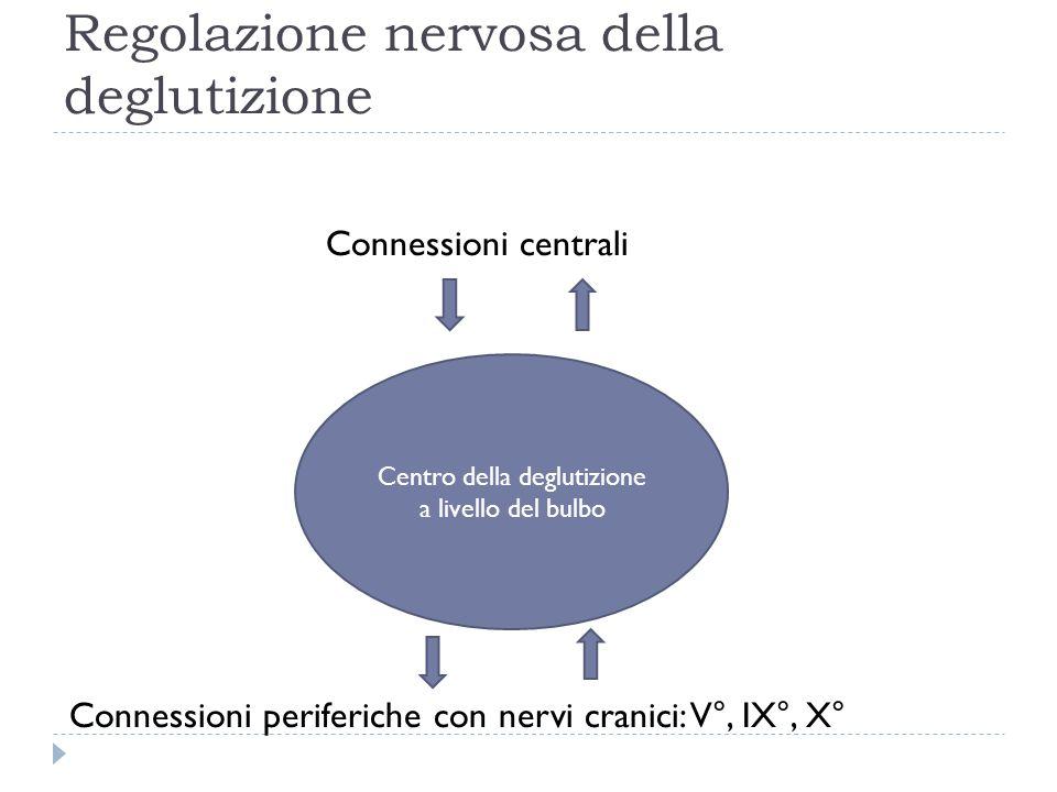 Regolazione nervosa della deglutizione Connessioni centrali Connessioni periferiche con nervi cranici: V°, IX°, X° Centro della deglutizione a livello