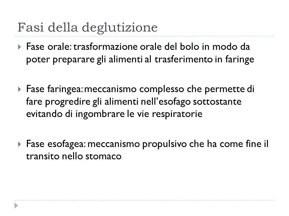 Apparato della deglutizione  Lingua: parte mobile e parte fissa o radice della lingua  Osso ioide  Velo del palato  Faringe: si estende dalla base cranica fino alla 6^ vertebra cervicale  Vestibolo della laringe  Esofago cervicale