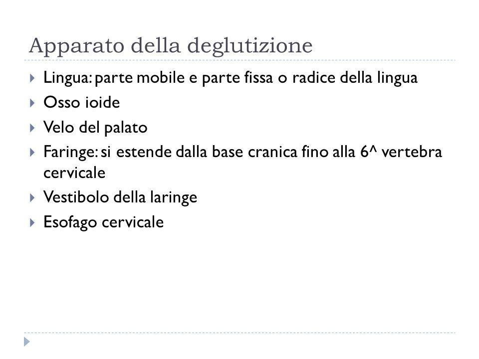 Apparato della deglutizione  Lingua: parte mobile e parte fissa o radice della lingua  Osso ioide  Velo del palato  Faringe: si estende dalla base