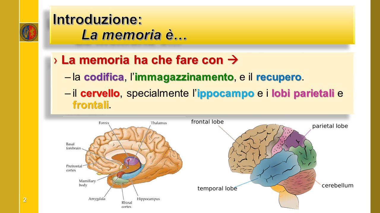 ›La memoria ha che fare con  codificaimmagazzinamentorecupero –la codifica, l'immagazzinamento, e il recupero. cervelloippocampolobi parietali fronta