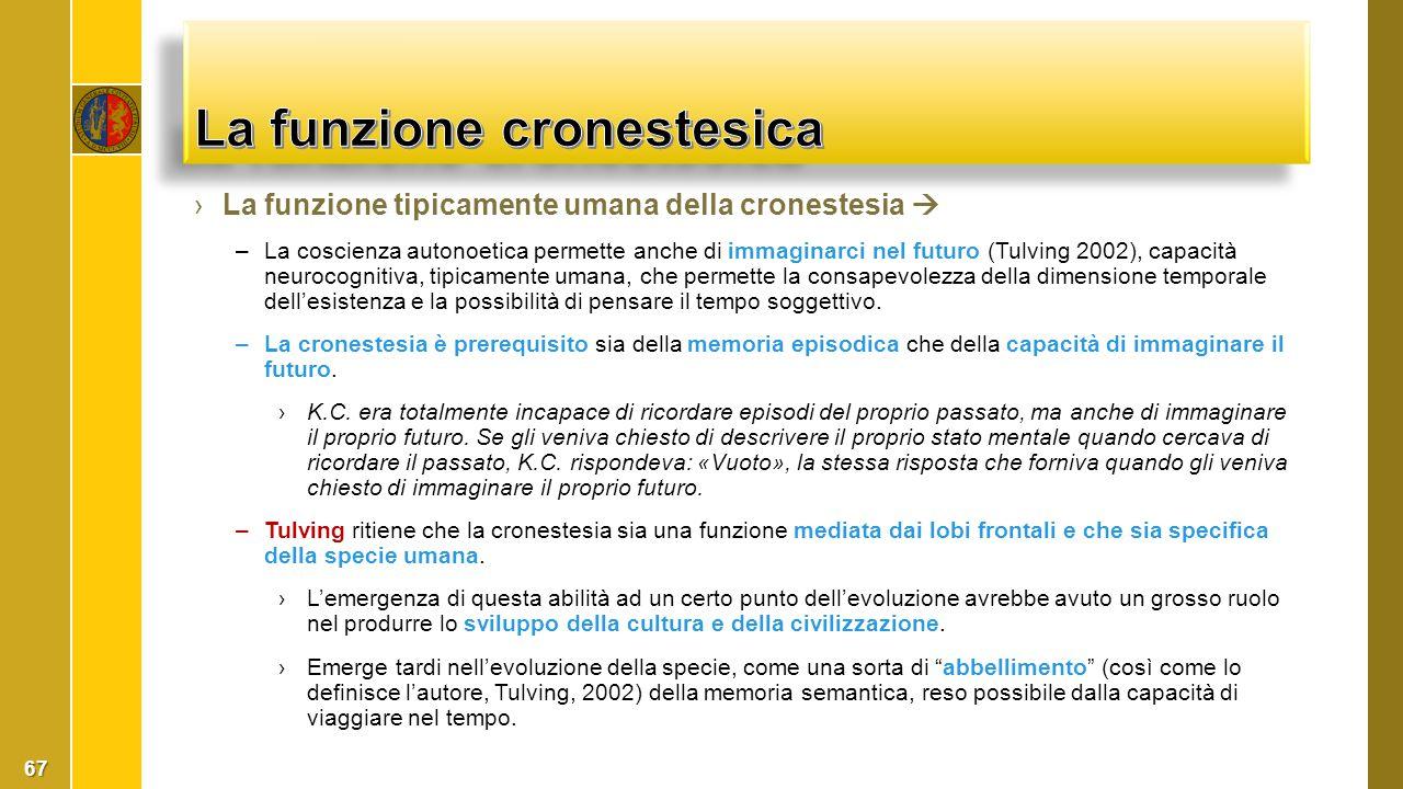 ›La funzione tipicamente umana della cronestesia  –La coscienza autonoetica permette anche di immaginarci nel futuro (Tulving 2002), capacità neuroco