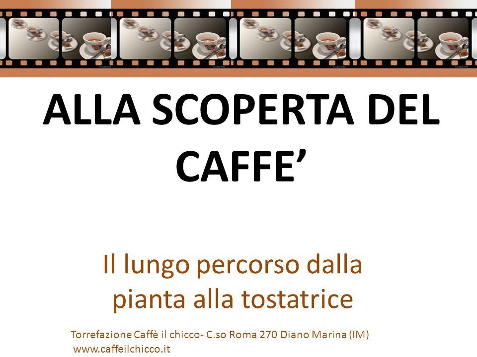 ALLA SCOPERTA DEL CAFFE' Il lungo percorso dalla pianta alla tostatrice Torrefazione Caffè il chicco- C.so Roma 270 Diano Marina (IM) www.caffeilchicco.it