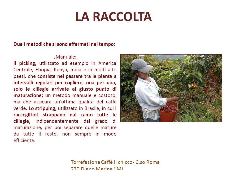 IL CONFEZIONAMENTO Caffè in Cialde Si tratta di caffè in polvere contenuto in cialde di carta e cellulosa.