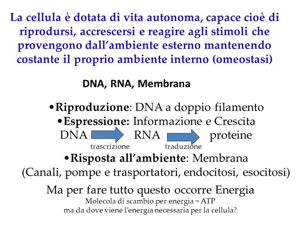 La cellula è dotata di vita autonoma, capace cioè di riprodursi, accrescersi e reagire agli stimoli che provengono dall'ambiente esterno mantenendo co