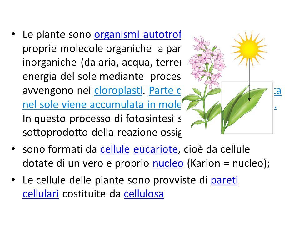 Le piante sono organismi autotrofi, sintetizzano le proprie molecole organiche a partire da sostanze inorganiche (da aria, acqua, terreno), utilizzand