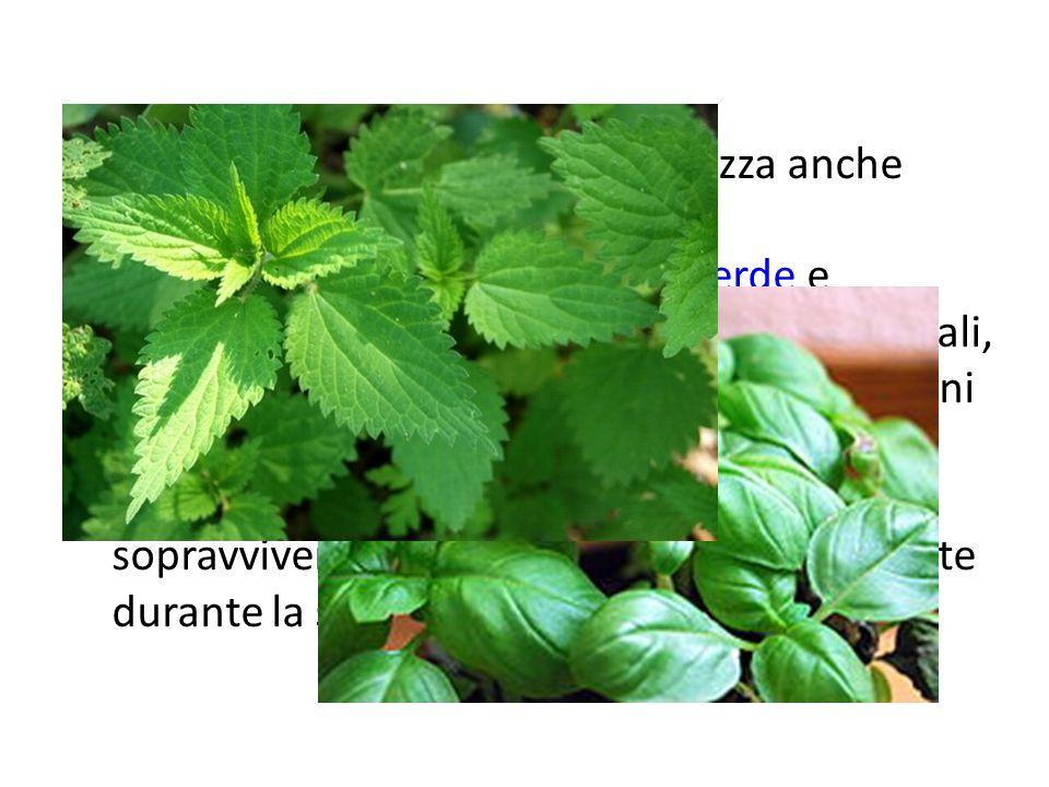 Insieme al termine pianta si utilizza anche quello di erba. Si considerano erbe le piante basse con fusto verde e non legnoso. Solitamente sono piante