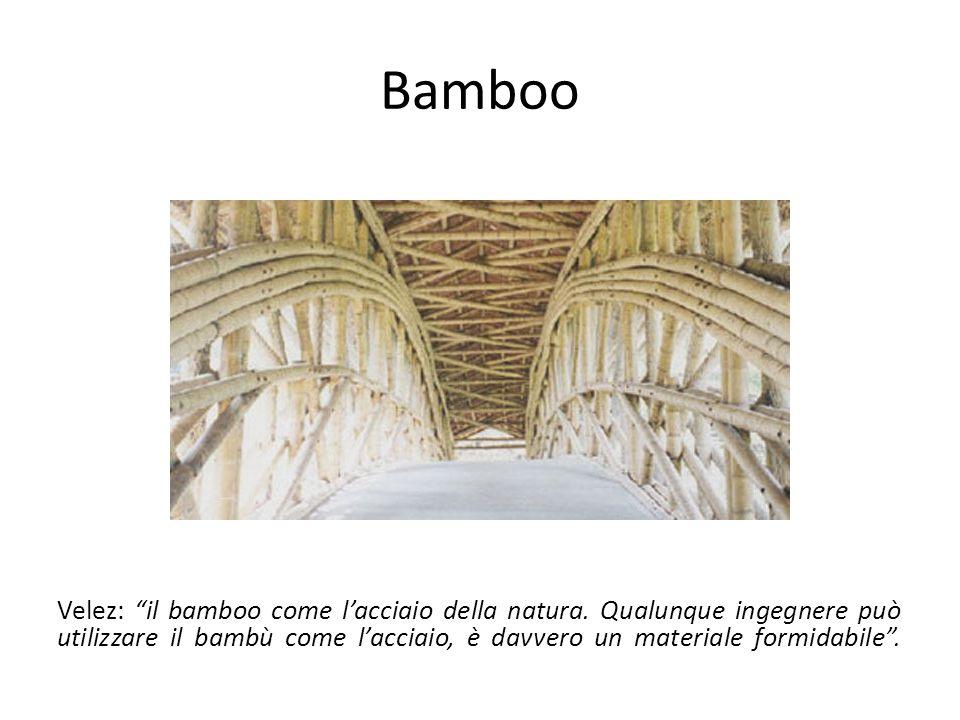 Bamboo Velez: il bamboo come l'acciaio della natura.