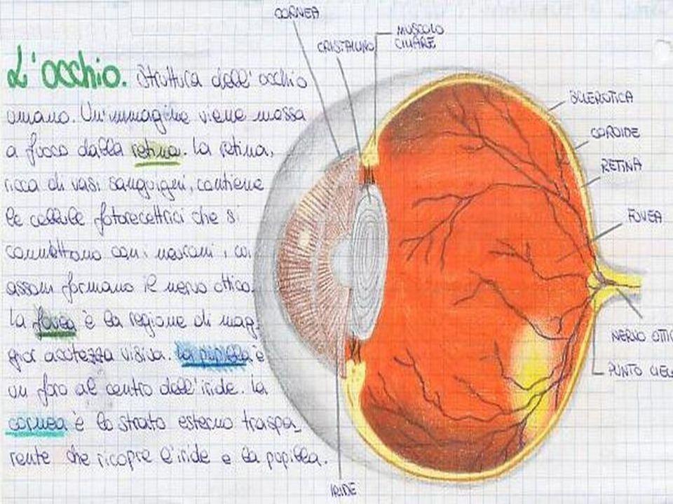 """CIE Yxy è l'insieme (lo spazio) di tutti i colori che l'occhio umano medio può vedere Sono stati proposti modelli definiti """"spazi di colore"""" da CIE (C"""