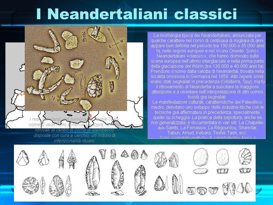 I Neandertaliani classici Neandertal a dx sapiens arcaico sx I resti del cranio del bambino di Teshik-Tash, come si vede nello schema qui sopra, si so