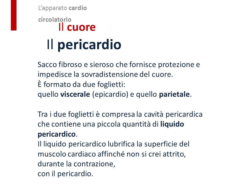 L'apparato cardio circolatorio Il cuore Il pericardio Sacco fibroso e sieroso che fornisce protezione e impedisce la sovradistensione del cuore. È for