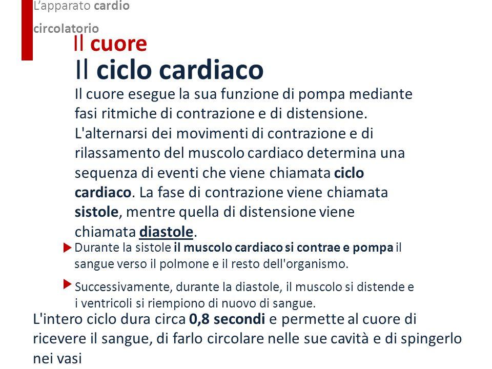 Il ciclo cardiaco Il cuore esegue la sua funzione di pompa mediante fasi ritmiche di contrazione e di distensione. L'alternarsi dei movimenti di contr