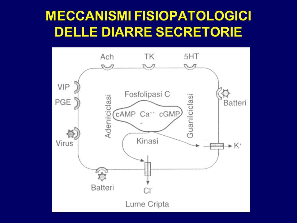 MECCANISMI FISIOPATOLOGICI DELLE DIARRE SECRETORIE