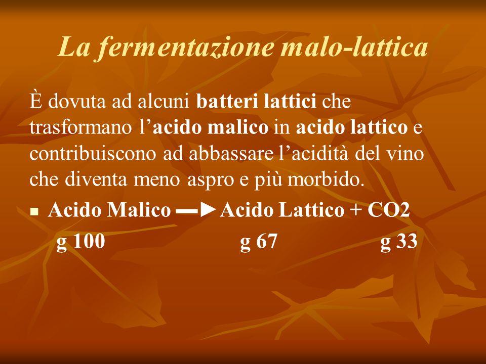 La fermentazione malo-lattica È dovuta ad alcuni batteri lattici che trasformano l'acido malico in acido lattico e contribuiscono ad abbassare l'acidità del vino che diventa meno aspro e più morbido.