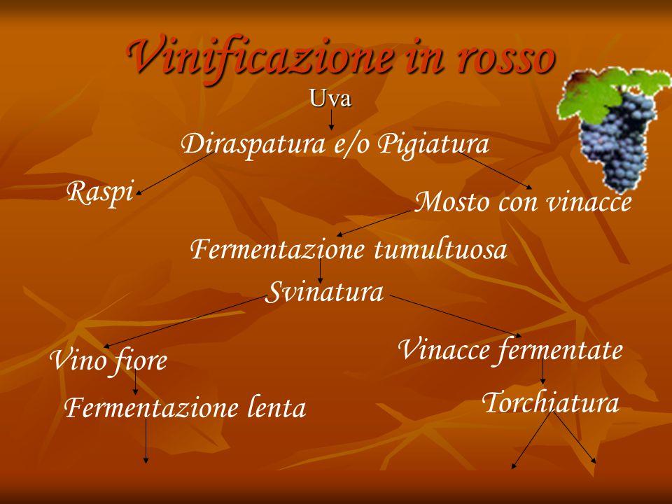 Vinificazione in rosso Uva Uva Diraspatura e/o Pigiatura Raspi Mosto con vinacce Fermentazione tumultuosa Svinatura Vino fiore Fermentazione lenta Vinacce fermentate Torchiatura