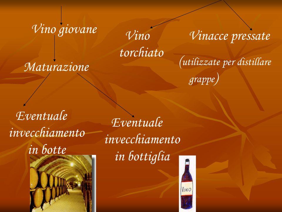 Vino giovane Vino torchiato Vinacce pressate ( utilizzate per distillare grappe ) Maturazione Eventuale invecchiamento in botte Eventuale invecchiamen