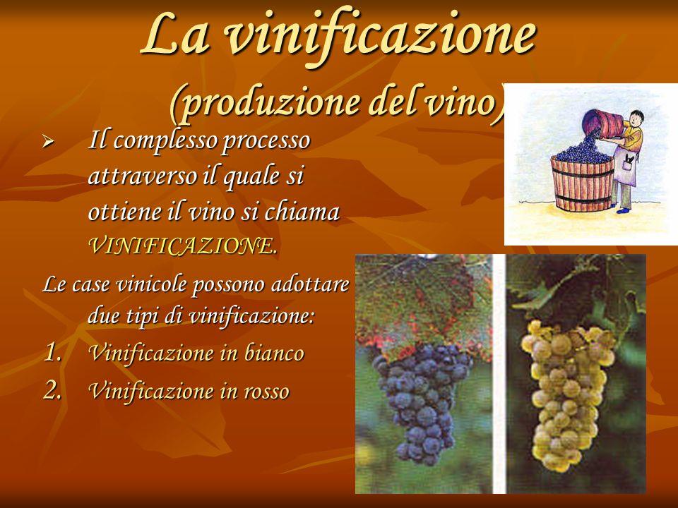La vinificazione (produzione del vino)  Il complesso processo attraverso il quale si ottiene il vino si chiama VINIFICAZIONE. Le case vinicole posson