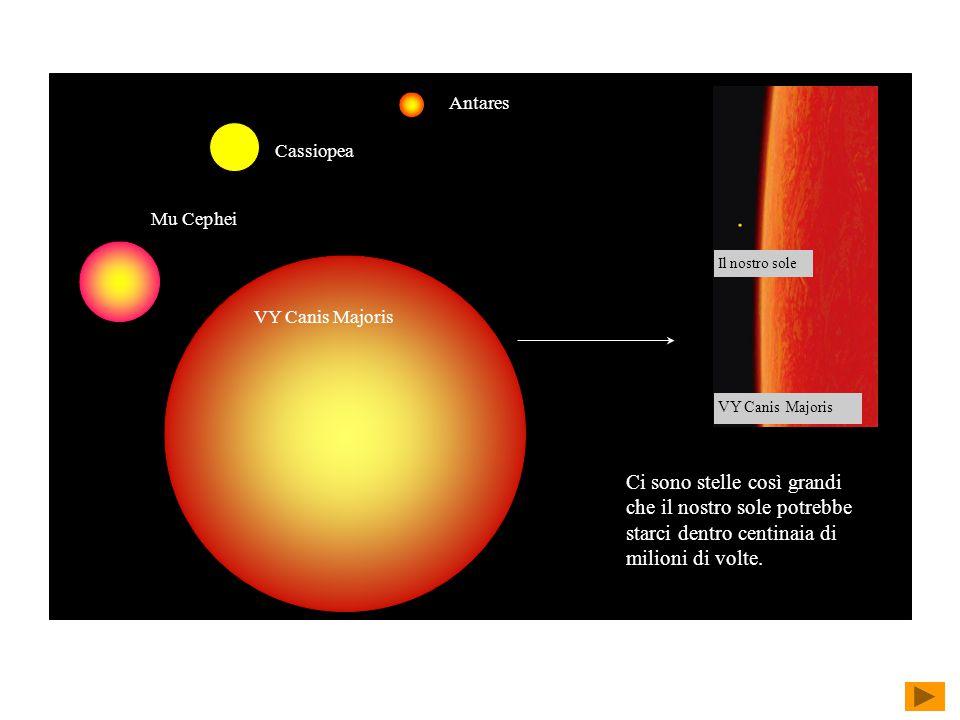 Mu Cephei Antares Cassiopea VY Canis Majoris Il nostro sole VY Canis Majoris Ci sono stelle così grandi che il nostro sole potrebbe starci dentro centinaia di milioni di volte.