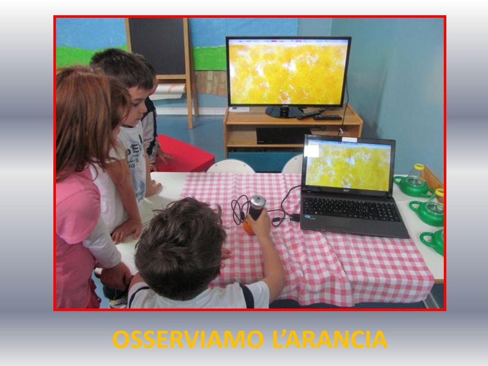 OSSERVIAMO L'ARANCIA