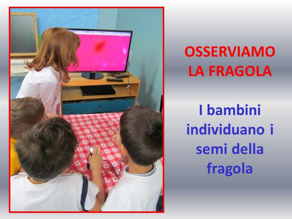OSSERVIAMO LA FRAGOLA I bambini individuano i semi della fragola
