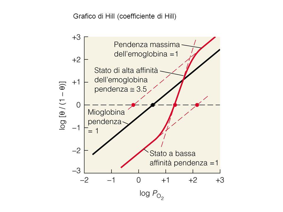 Grafico di Hill (coefficiente di Hill)