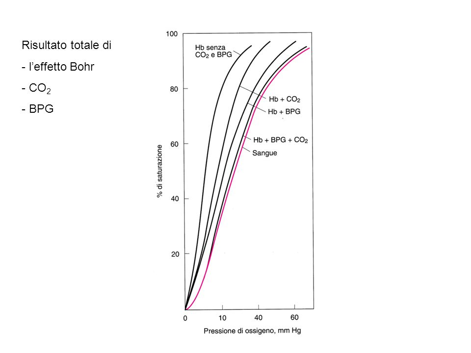 Risultato totale di - l'effetto Bohr - CO 2 - BPG
