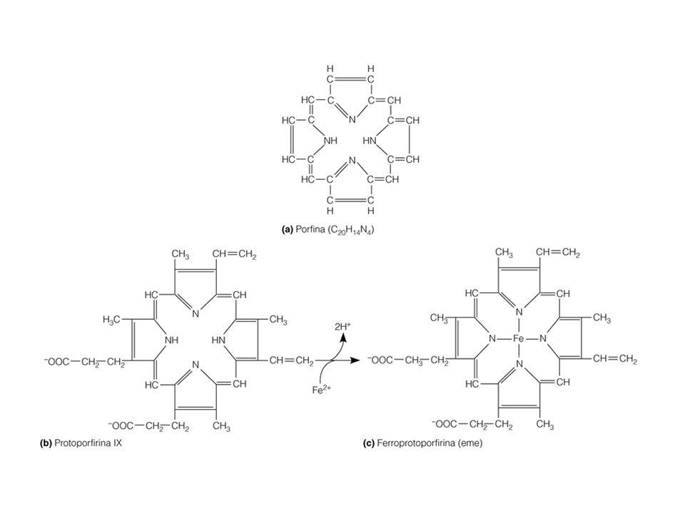 Emoglobina/mioglobina: il gruppo eme non è legato in modo covalente
