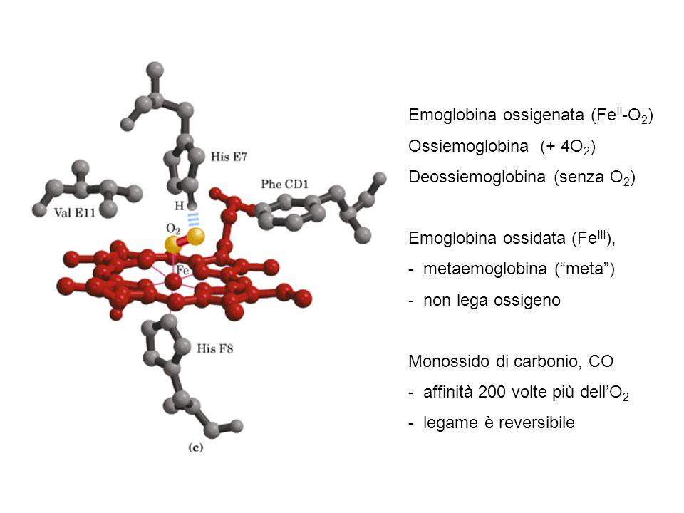 Emoglobina ossigenata (Fe II -O 2 ) Ossiemoglobina (+ 4O 2 ) Deossiemoglobina (senza O 2 ) Emoglobina ossidata (Fe III ), - metaemoglobina ( meta ) - non lega ossigeno Monossido di carbonio, CO - affinità 200 volte più dell'O 2 - legame è reversibile