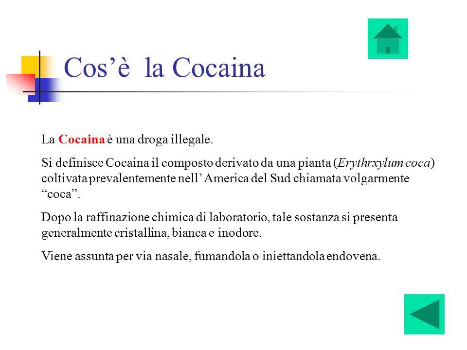 Cos'è la Cocaina La Cocaina è una droga illegale. Si definisce Cocaina il composto derivato da una pianta (Erythrxylum coca) coltivata prevalentemente
