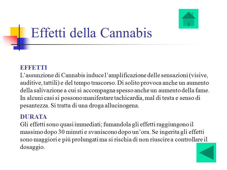 Effetti della Cannabis EFFETTI L'assunzione di Cannabis induce l'amplificazione delle sensazioni (visive, auditive, tattili) e del tempo trascorso. Di