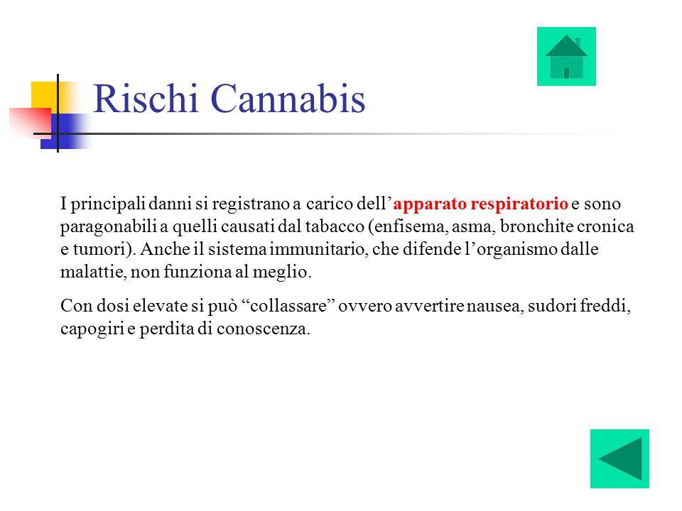 Rischi Cannabis I principali danni si registrano a carico dell'apparato respiratorio e sono paragonabili a quelli causati dal tabacco (enfisema, asma,