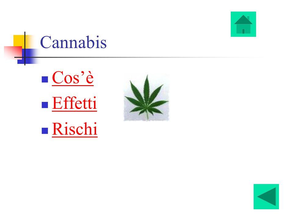 Cannabis Cos'è Effetti Rischi