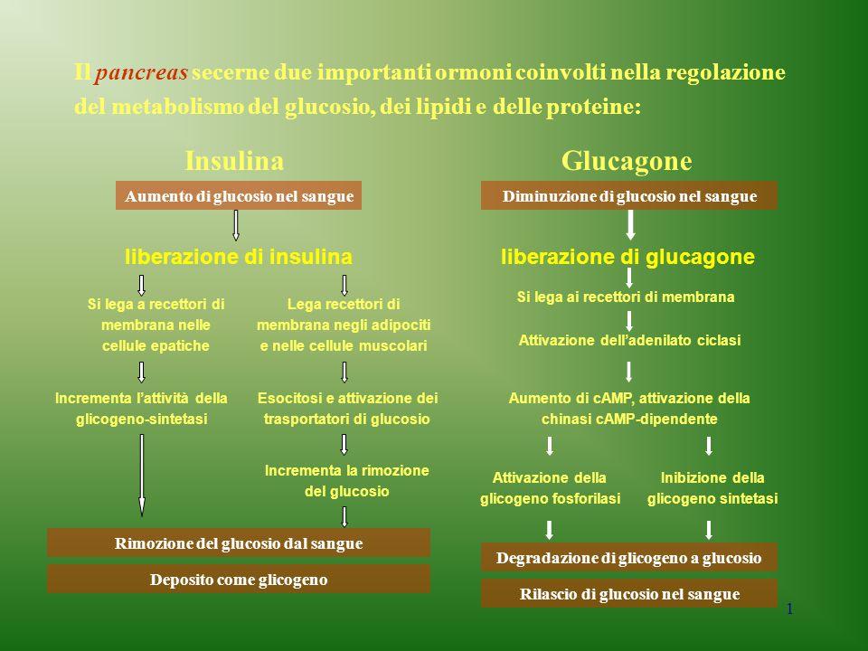 1 Il pancreas secerne due importanti ormoni coinvolti nella regolazione del metabolismo del glucosio, dei lipidi e delle proteine: InsulinaGlucagone A