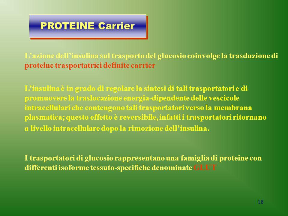 18 L'azione dell'insulina sul trasporto del glucosio coinvolge la trasduzione di proteine trasportatrici definite carrier I trasportatori di glucosio