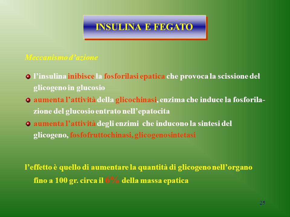 25 Meccanismo d'azione INSULINA E FEGATO l'insulina inibisce la fosforilasi epatica che provoca la scissione del glicogeno in glucosio aumenta l'attiv