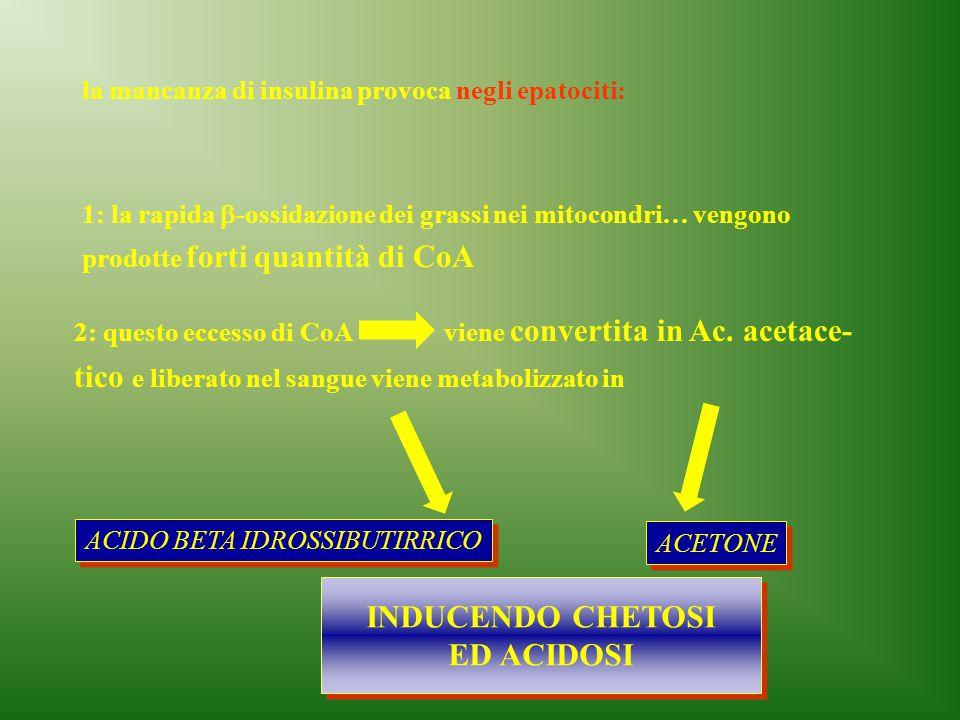 la mancanza di insulina provoca negli epatociti: 1: la rapida  -ossidazione dei grassi nei mitocondri… vengono prodotte forti quantità di CoA 2: ques