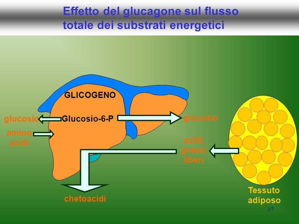37 Effetto del glucagone sul flusso totale dei substrati energetici Glucosio-6-P GLICOGENO glucosio amino acidi grassi liberi chetoacidi Tessuto adipo