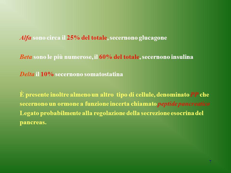7 Alfa sono circa il 25% del totale, secernono glucagone Beta sono le più numerose, il 60% del totale, secernono insulina Delta il 10% secernono somat