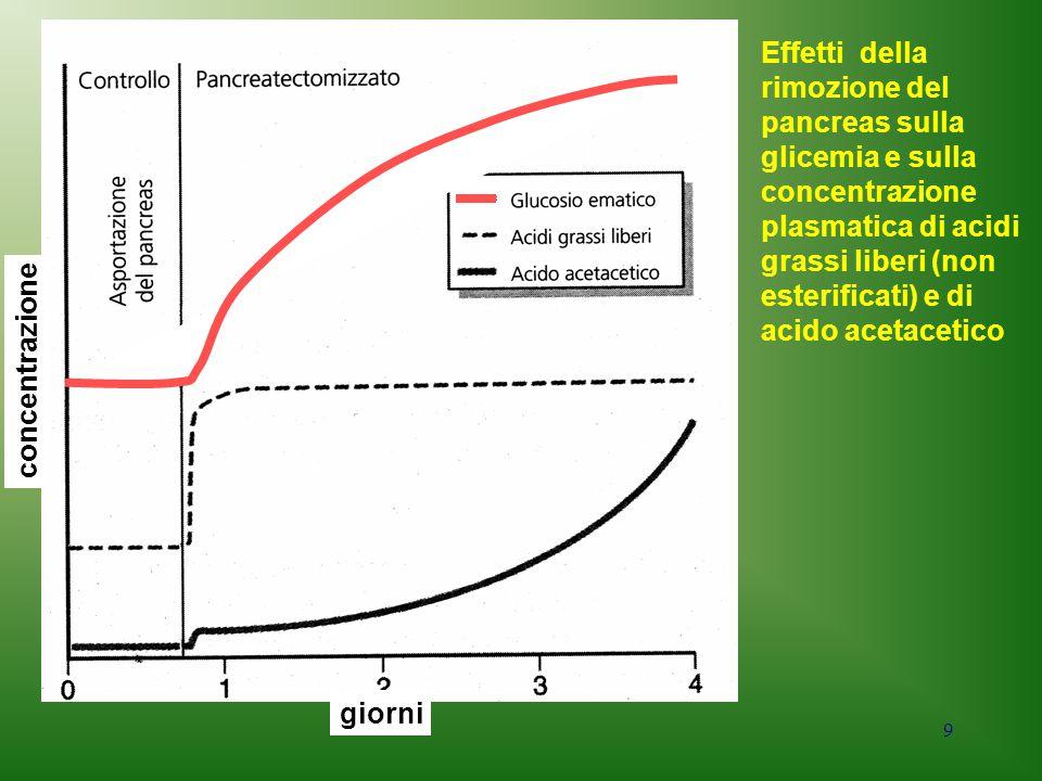 9 giorni concentrazione Effetti della rimozione del pancreas sulla glicemia e sulla concentrazione plasmatica di acidi grassi liberi (non esterificati