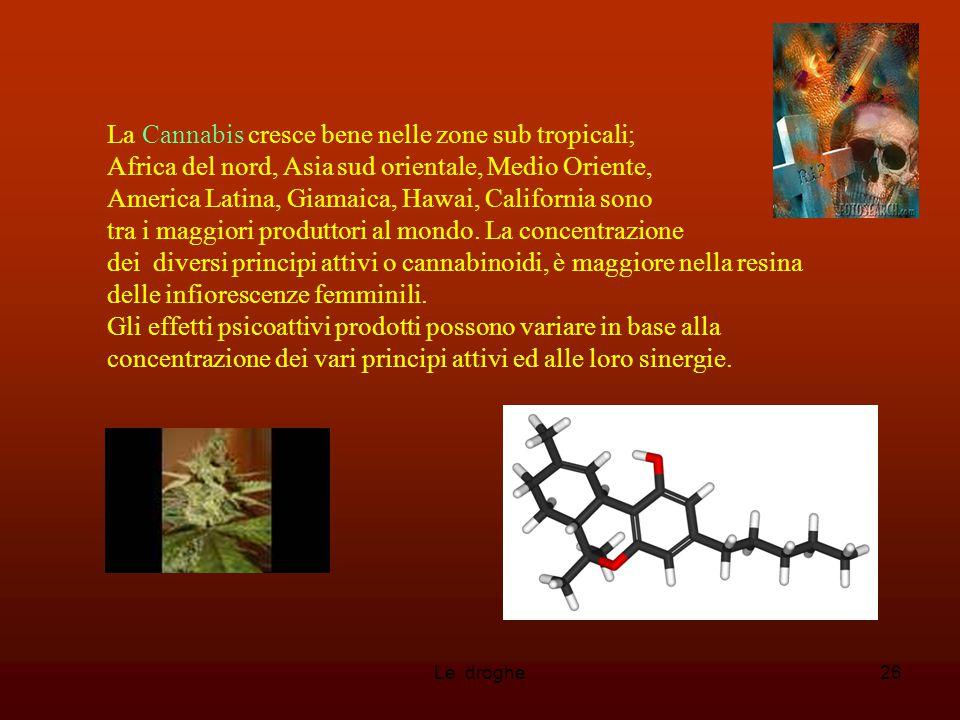 Le droghe26 La Cannabis cresce bene nelle zone sub tropicali; Africa del nord, Asia sud orientale, Medio Oriente, America Latina, Giamaica, Hawai, Cal