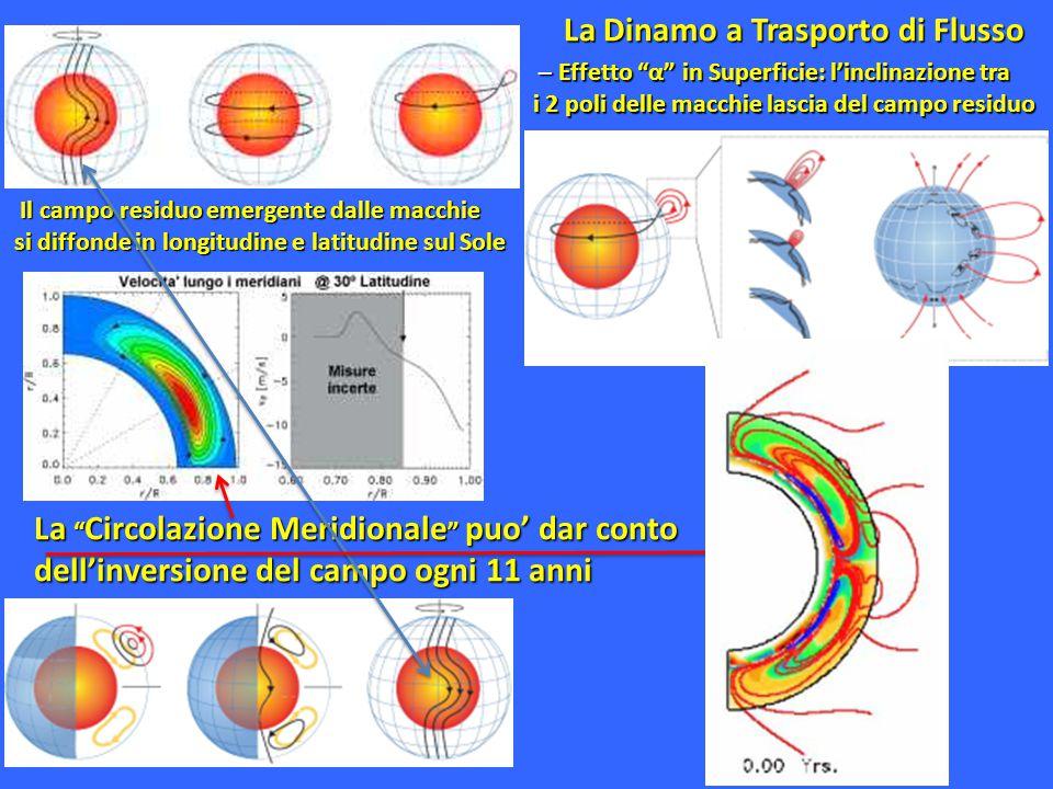 """La """" Circolazione Meridionale """" puo' dar conto dell'inversione del campo ogni 11 anni – Effetto """"α"""" in Superficie: l'inclinazione tra – Effetto """"α"""" in"""