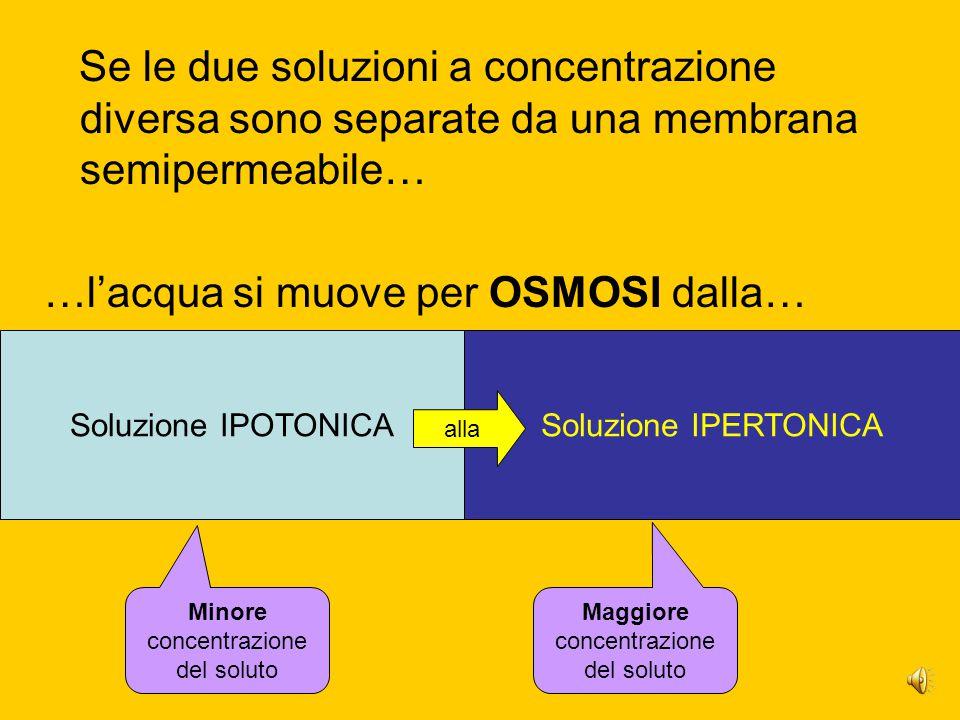 Se le due soluzioni a concentrazione diversa sono separate da una membrana semipermeabile… …l'acqua si muove per OSMOSI dalla… Soluzione IPOTONICASoluzione IPERTONICA alla Minore concentrazione del soluto Maggiore concentrazione del soluto