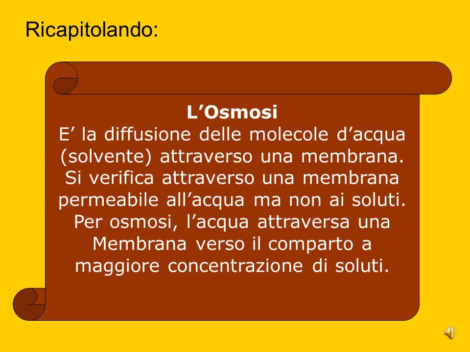 Ricapitolando: L'Osmosi E' la diffusione delle molecole d'acqua (solvente) attraverso una membrana.