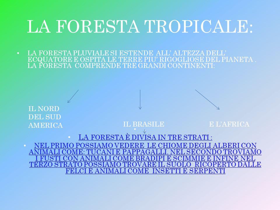 LA FORESTA TROPICALE: LA FORESTA PLUVIALE SI ESTENDE ALL' ALTEZZA DELL' ECQUATORE E OSPITA LE TERRE PIU' RIGOGLIOSE DEL PIANETA. LA FORESTA COMPRENDE