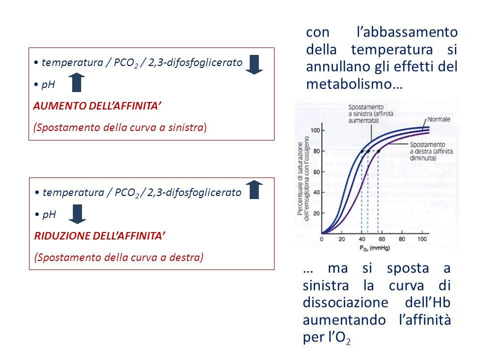 con l'abbassamento della temperatura si annullano gli effetti del metabolismo… … ma si sposta a sinistra la curva di dissociazione dell'Hb aumentando
