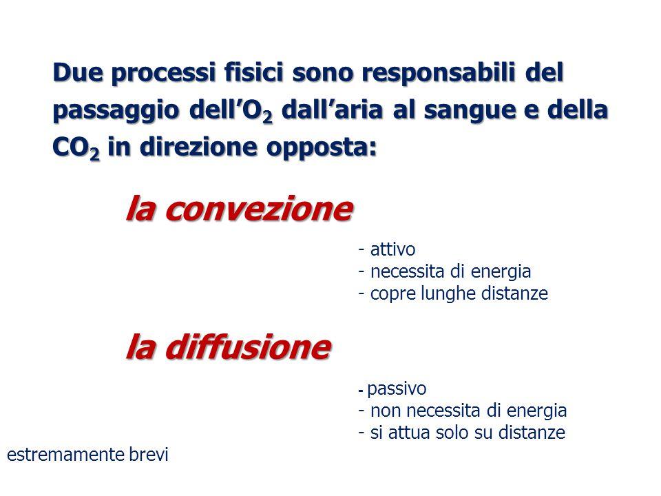 Due processi fisici sono responsabili del passaggio dell'O 2 dall'aria al sangue e della CO 2 in direzione opposta: la convezione - attivo - necessita