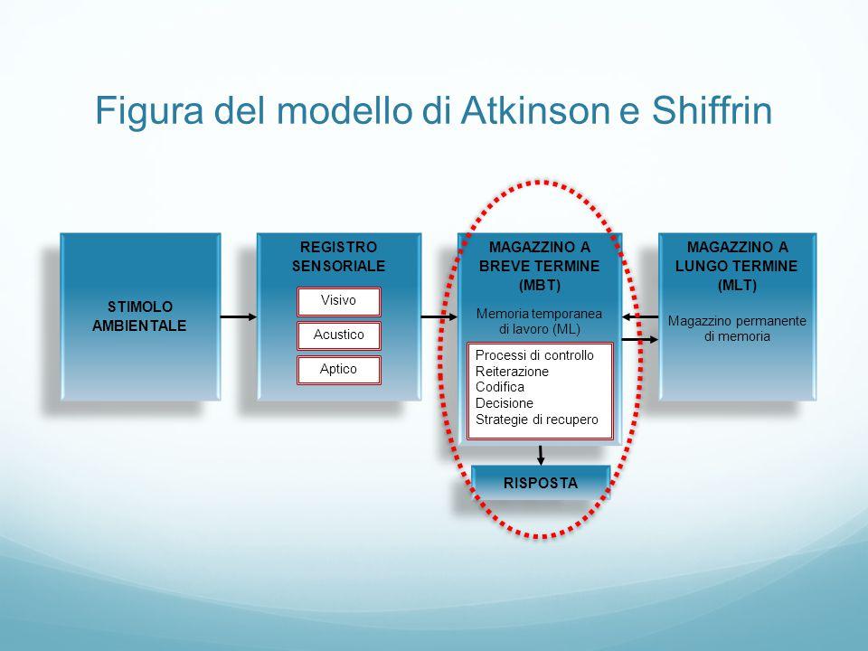Figura del modello di Atkinson e Shiffrin REGISTRO SENSORIALE REGISTRO SENSORIALE Visivo Acustico Aptico MAGAZZINO A BREVE TERMINE (MBT) Memoria tempo