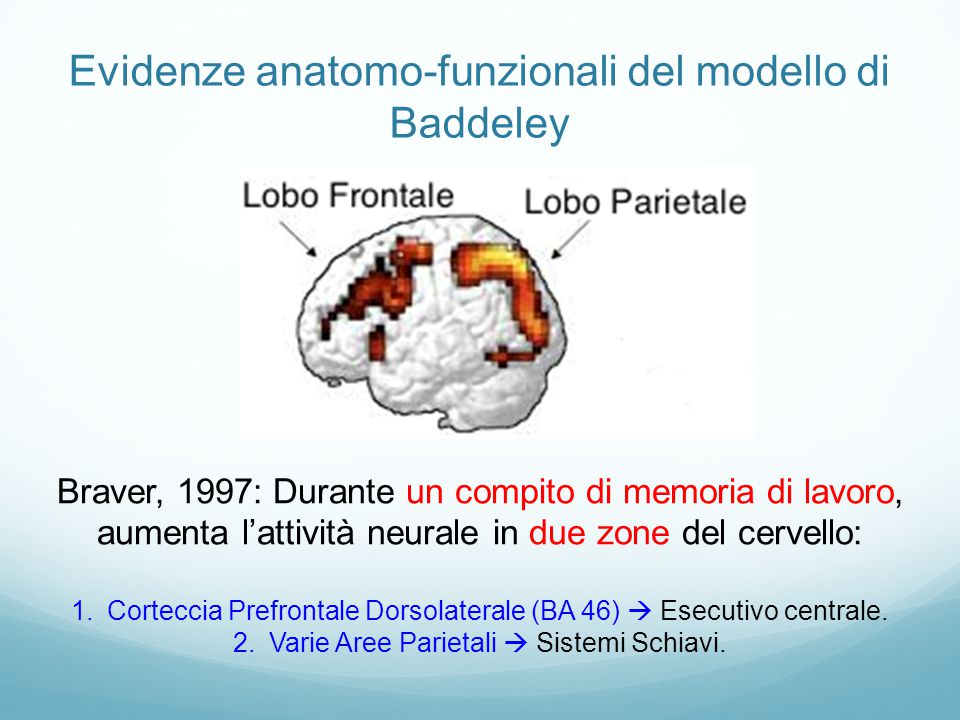 Evidenze anatomo-funzionali del modello di Baddeley Braver, 1997: Durante un compito di memoria di lavoro, aumenta l'attività neurale in due zone del