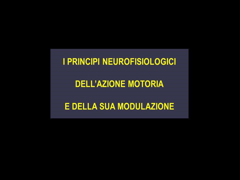 I PRINCIPI NEUROFISIOLOGICI DELL'AZIONE MOTORIA E DELLA SUA MODULAZIONE I PRINCIPI NEUROFISIOLOGICI DELL'AZIONE MOTORIA E DELLA SUA MODULAZIONE