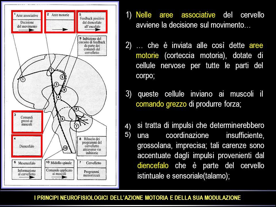 1)Nelle aree associative del cervello avviene la decisione sul movimento… 2) … che è inviata alle così dette aree motorie (corteccia motoria), dotate di cellule nervose per tutte le parti del corpo; 3) queste cellule inviano ai muscoli il comando grezzo di produrre forza; si tratta di impulsi che determinerebbero una coordinazione insufficiente, grossolana, imprecisa; tali carenze sono accentuate dagli impulsi provenienti dal diencefalo che è parte del cervello istintuale e sensoriale(talamo); 4)5) I PRINCIPI NEUROFISIOLOGICI DELL'AZIONE MOTORIA E DELLA SUA MODULAZIONE