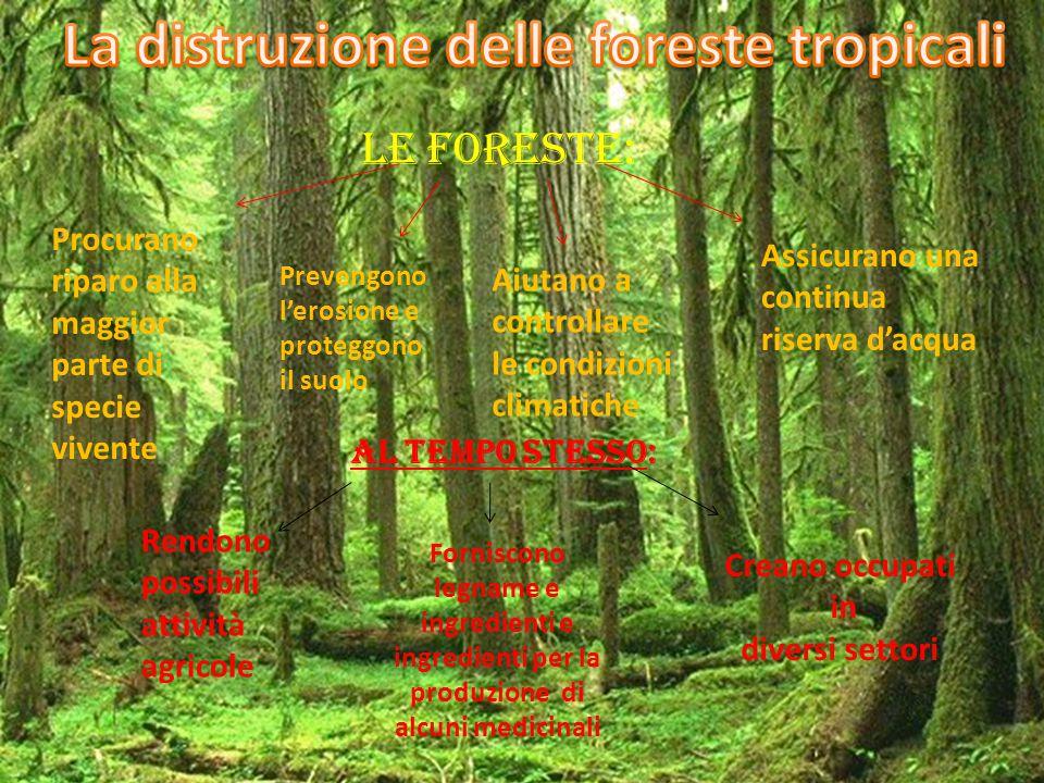Le foreste: Procurano riparo alla maggior parte di specie vivente Prevengono l'erosione e proteggono il suolo Aiutano a controllare le condizioni clim